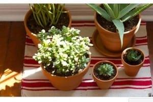 Mai tenere queste 5 piante in casa! Ecco quali sono