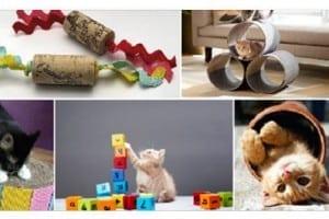 10 Idee per Realizzare dei fantastici Giochi per Gatti con il fai da Te