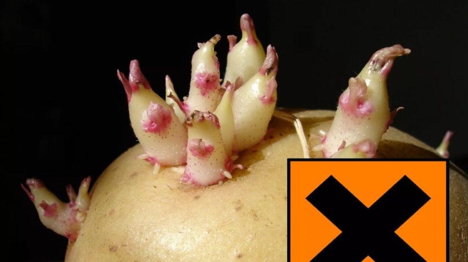 Come congelare le patate pronte alla cottura - Profumi ...