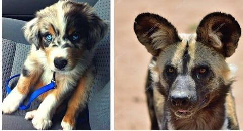 30 Esempi Di Bellissimi Cani Meticci Incroci Di Razze Canine Diverse