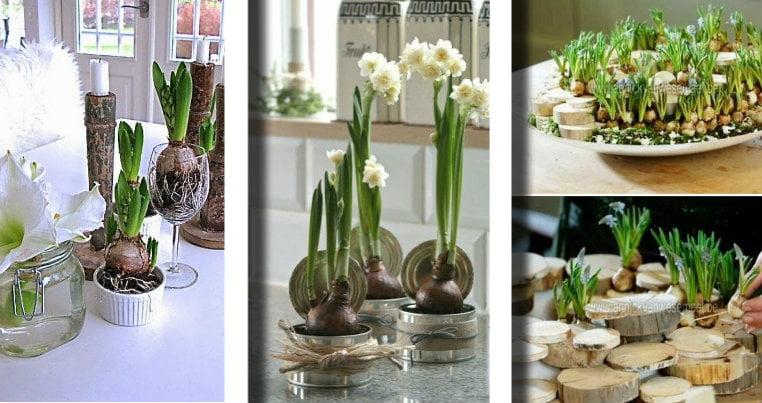 Bulbi In Vaso Di Vetro.Ecco 20 Idee Da Realizzare Con I Bulbi In Fiore Senza