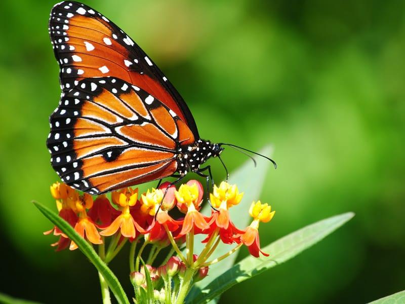 incontri farfalle
