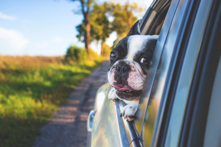 eliminare l'odore del cane dalla macchina