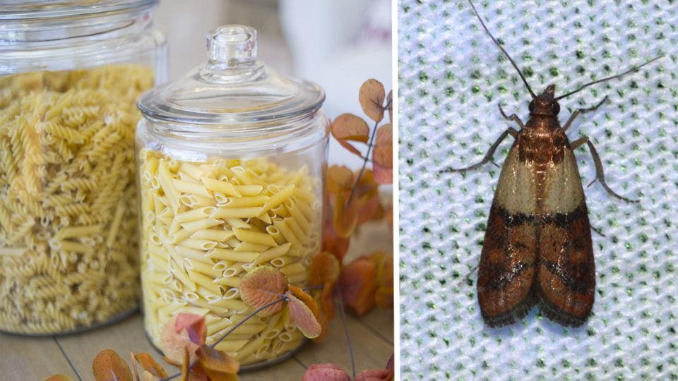 come eliminare le farfalle dalla dispensa