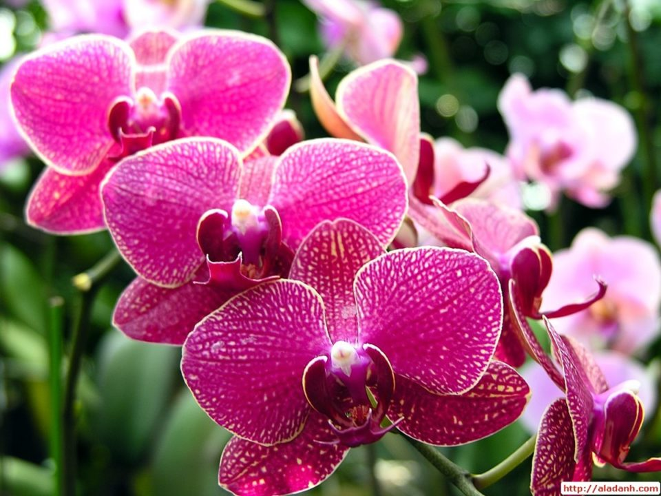 Le orchidee, purificano l'aria di casa e migliorano l'umore. Consigli per la loro cura