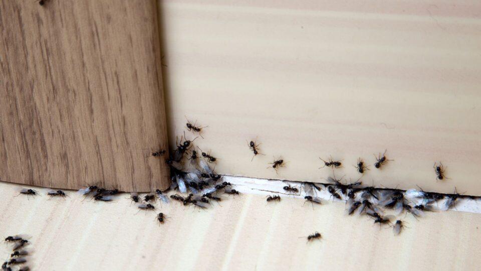 I migliori trucchi per eliminare gli insetti senza inquinare l'ambiente e la salute