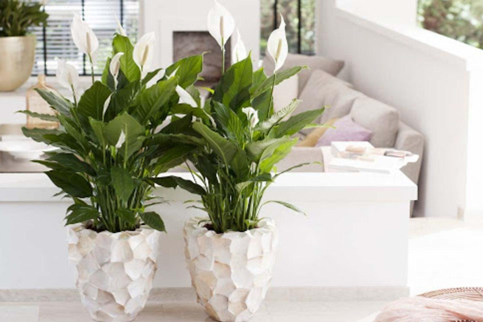 Piante da interni che depurano l'aria in casa: ecco le ...