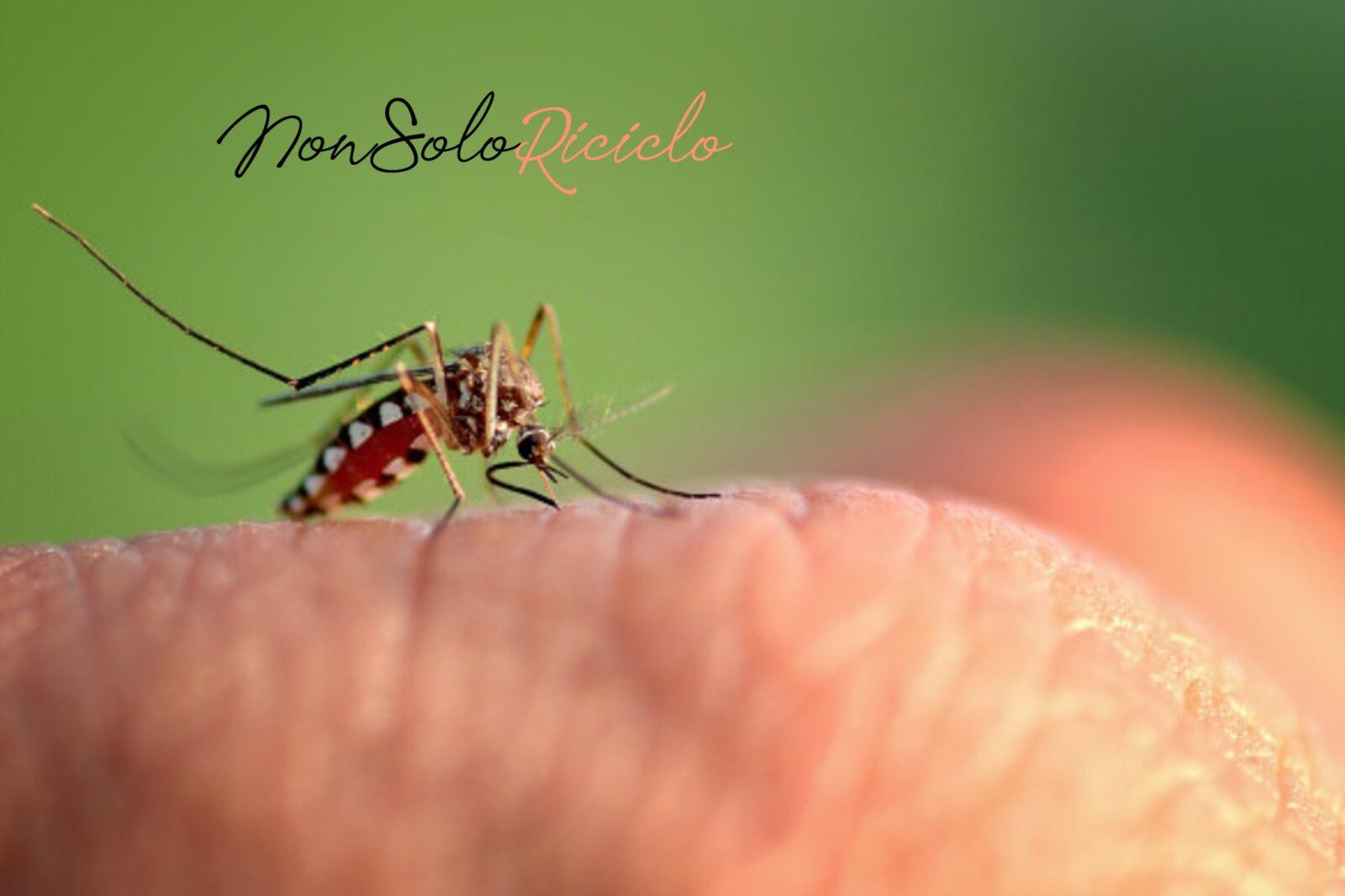 le zanzare pungono