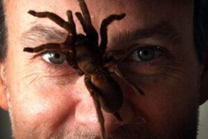 veleno di ragni per la ricerca