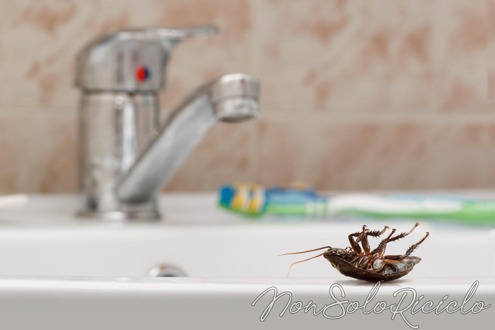 Mai più scarafaggi con questo semplice rimedio naturale!