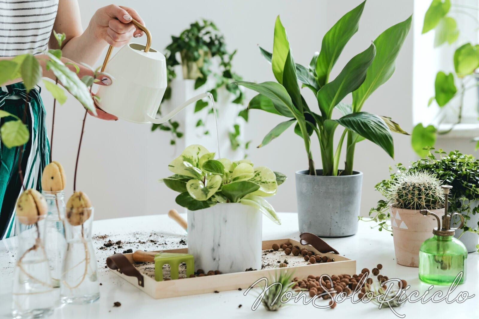 Innaffiare le piante durante le vacanze? Ecco come fare!