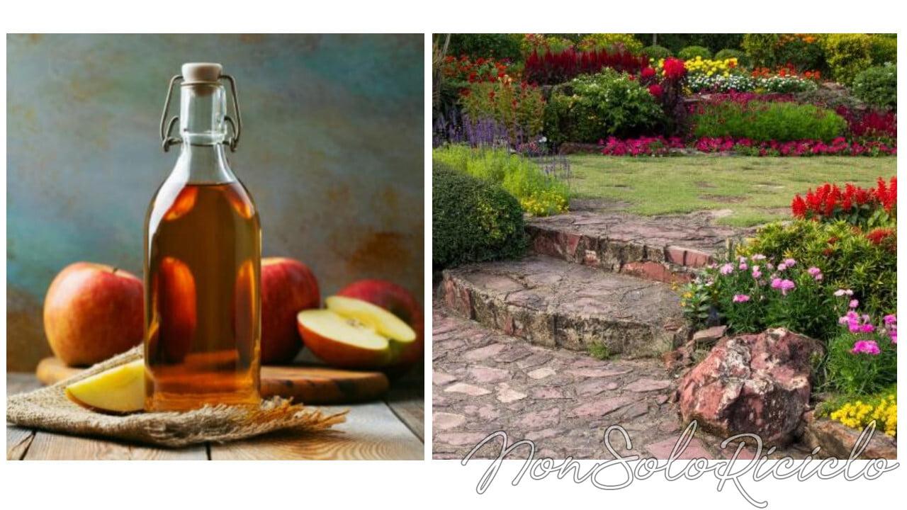aceto di mele in giardino