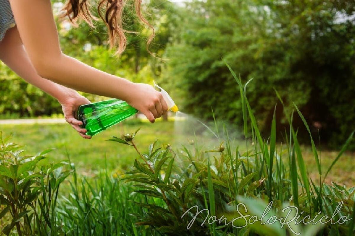eliminare la muffa dalle piante