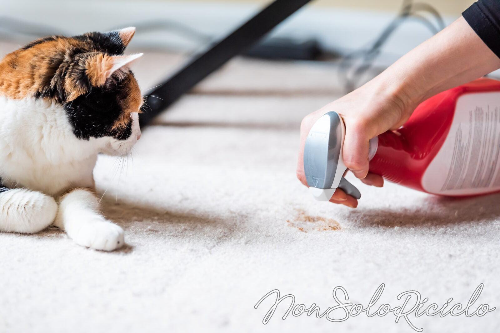 smacchiare un tappeto