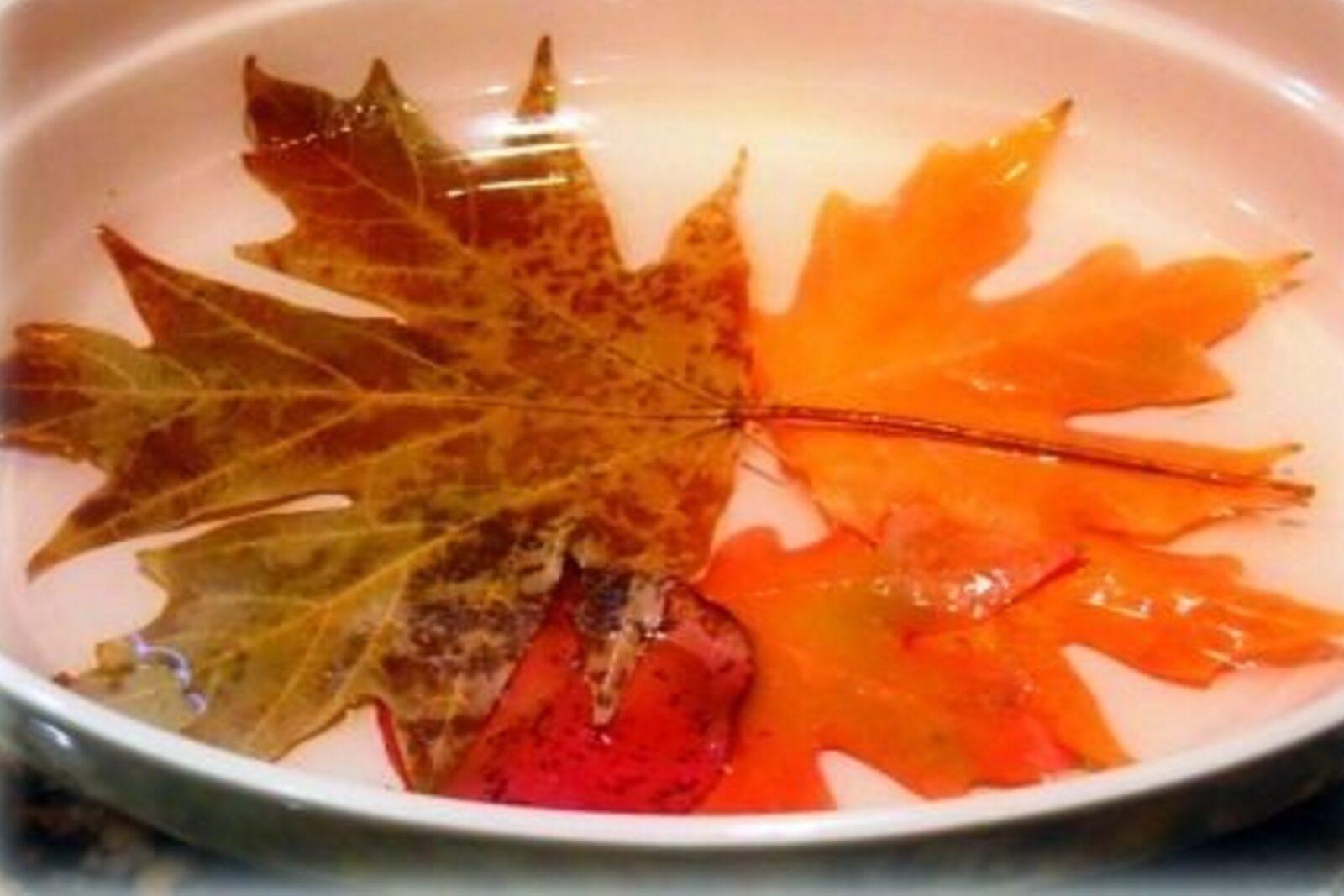 conservare le foglie autunnali