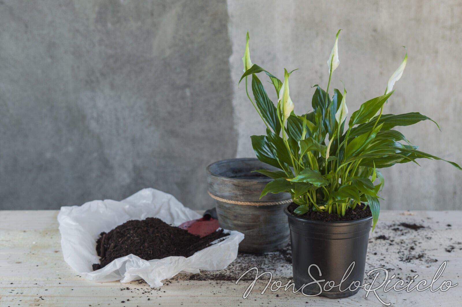 piante da tenere in camera