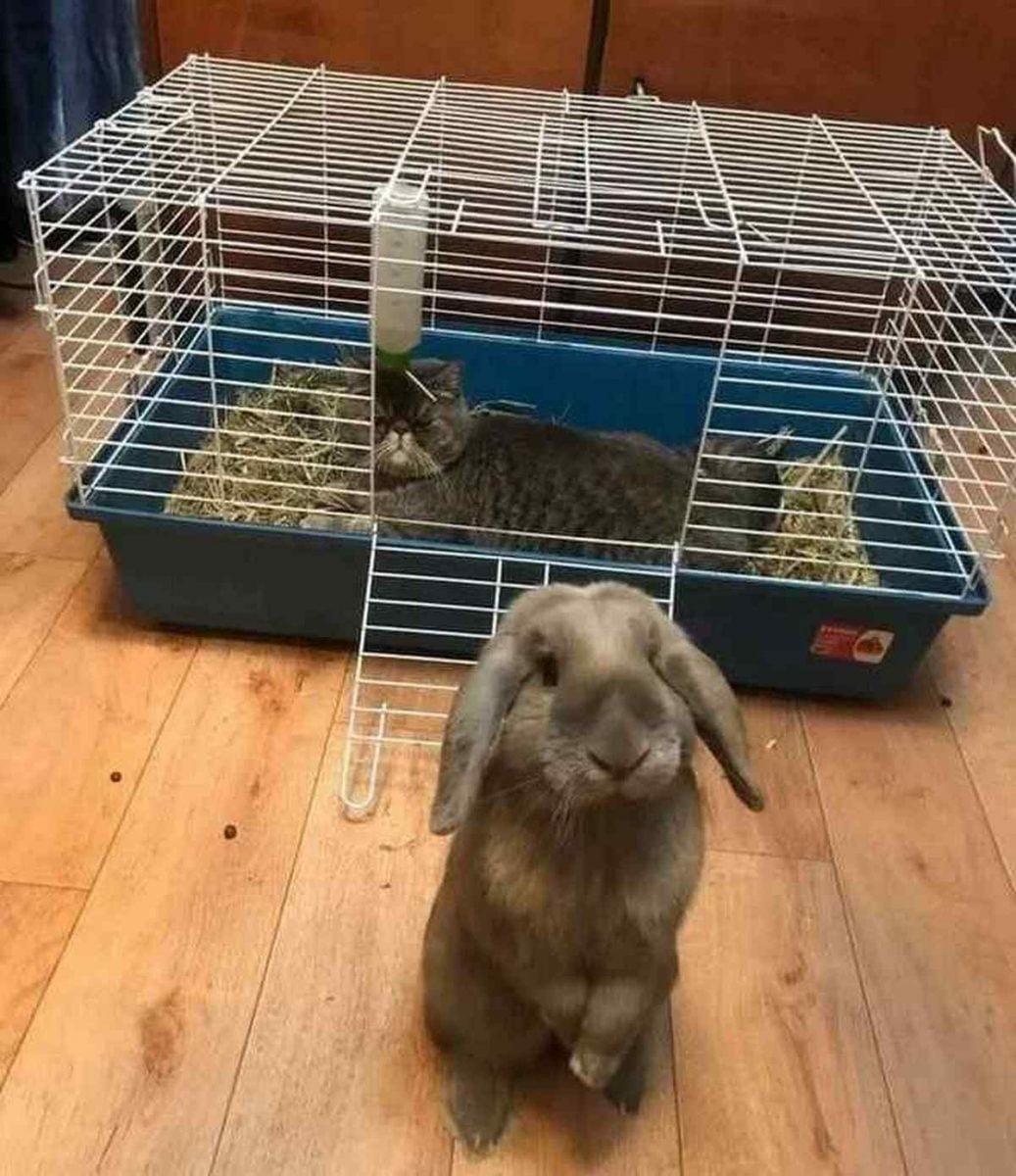 6 gatti che hanno scelto gato coniglio