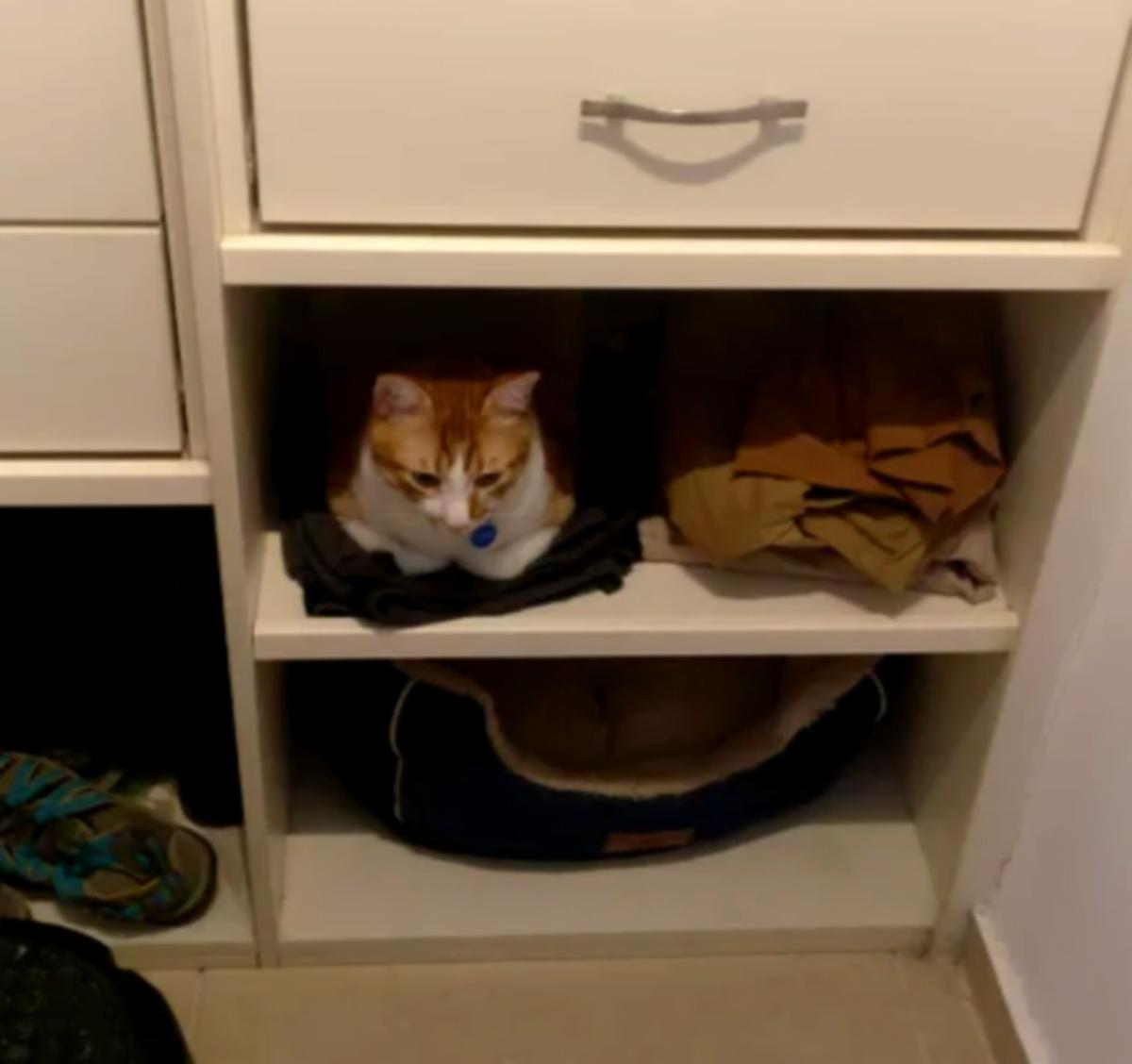 6 gatti che hanno scelto gatto biancheria