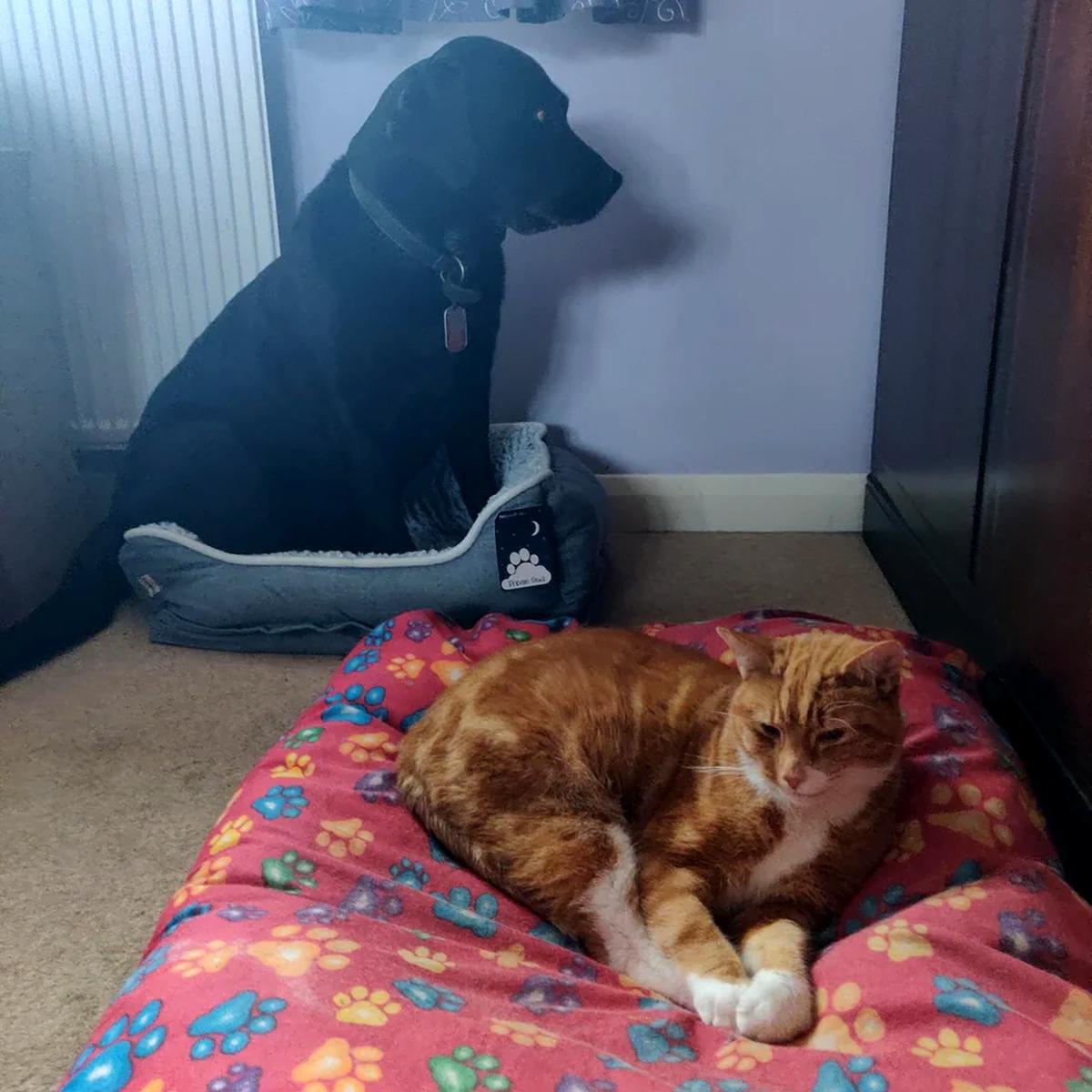 6 gatti che hanno scelto gatto cane