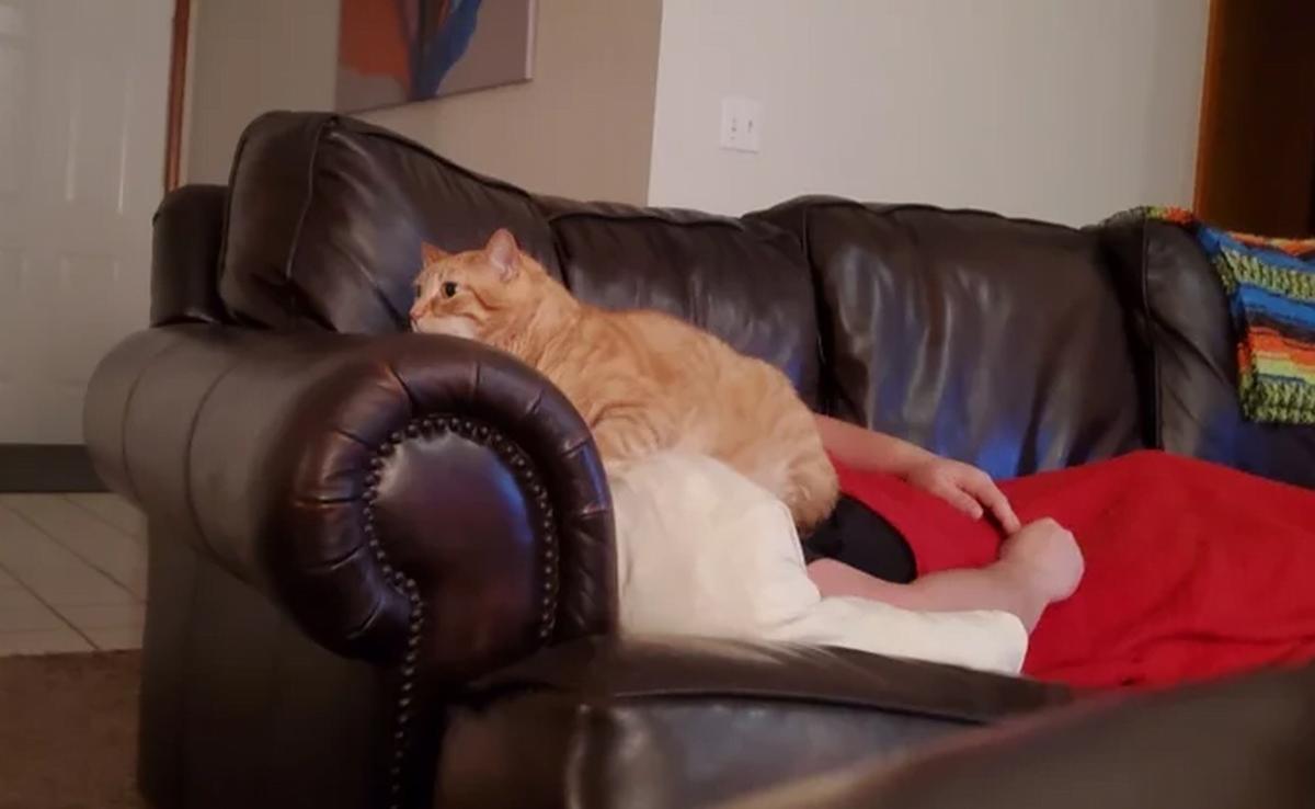 6 gatti che hanno scelto gatto faccia