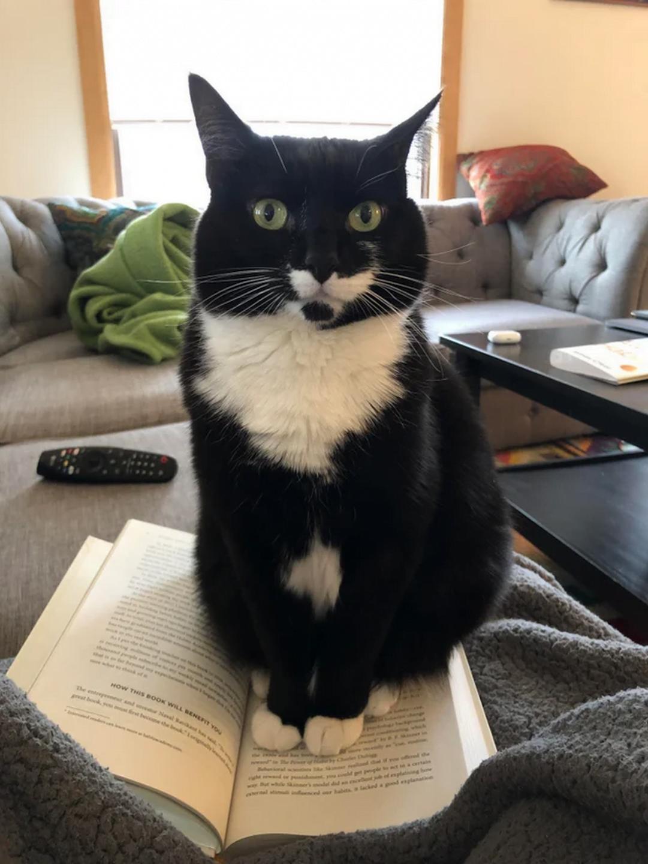 6 gatti che hanno scelto gatto libro