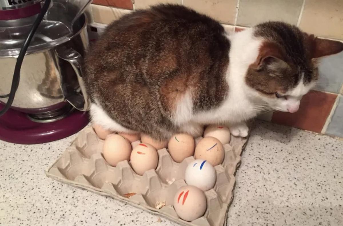 6 gatti che hanno scelto gatto uova