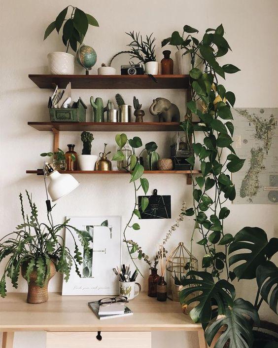 arredare casa con le piante 1