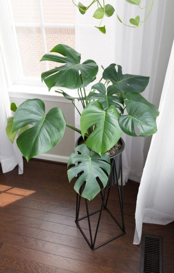 arredare casa con le piante 2