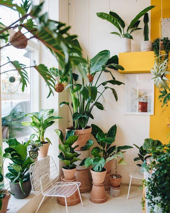 arredare casa con le piante 5