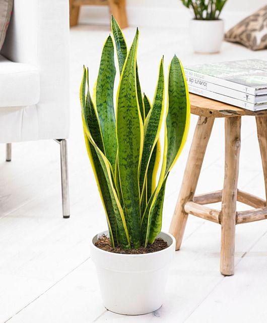 arredare casa con le piante 6
