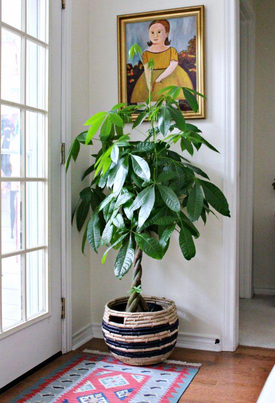 arredare casa con le piante 7