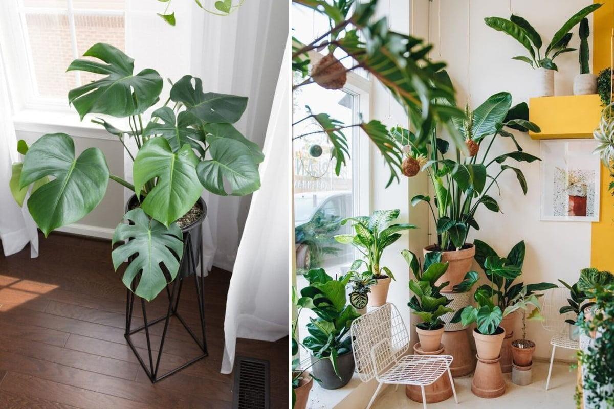 arredare casa con le piante arredare con le piante
