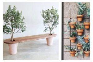 come organizzare piante e fiori piante
