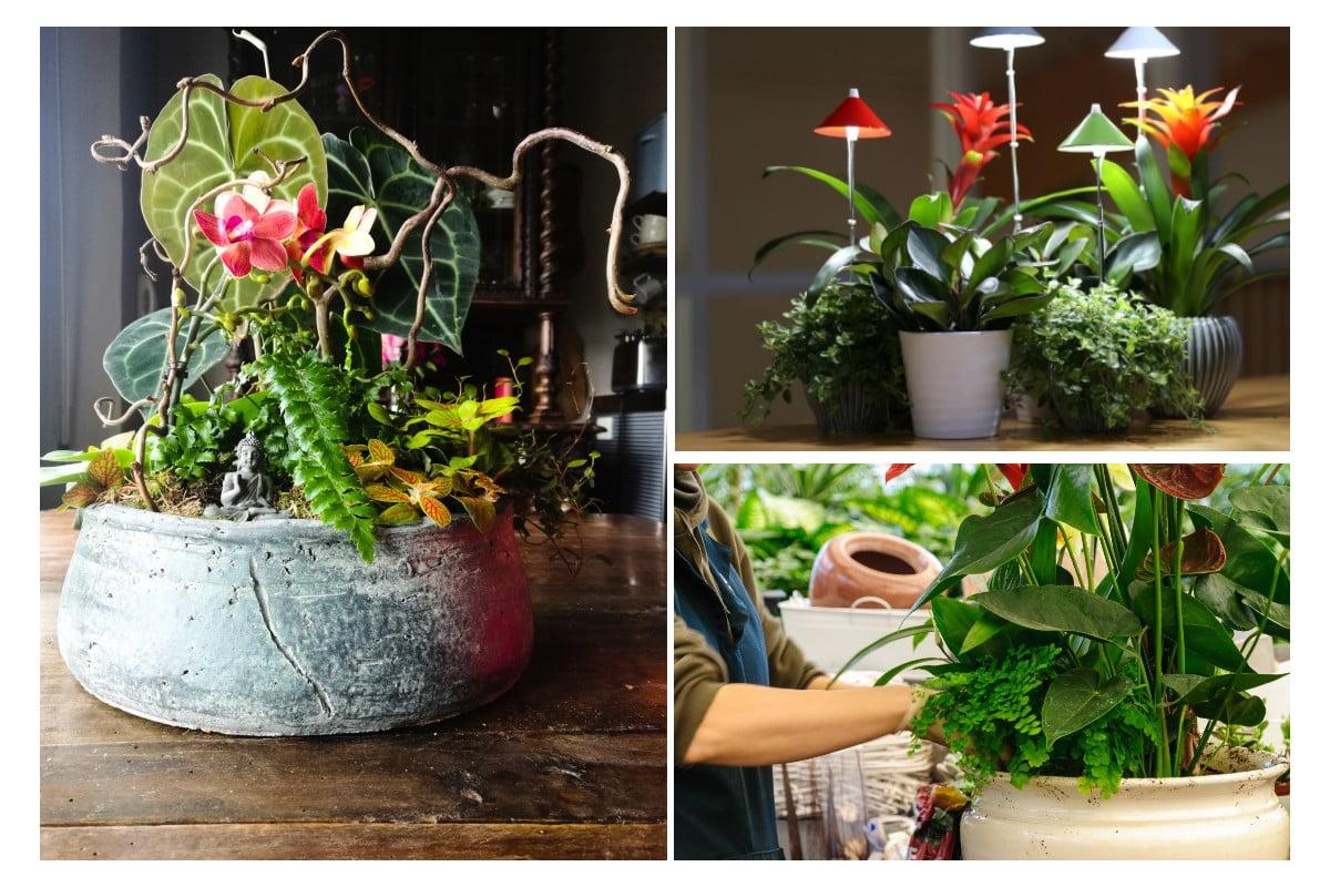Composizione piante da interno: come abbellire il soggiorno.