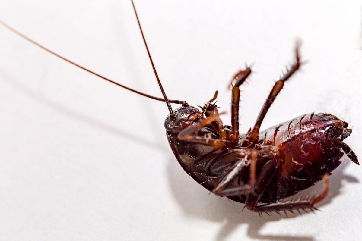 insetticidi naturali scopri come prepararli AdobeStock 174268149
