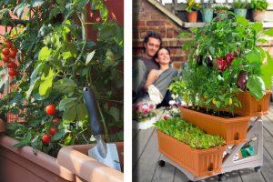 come coltivare lorto sul terrazzo orto sul balcone