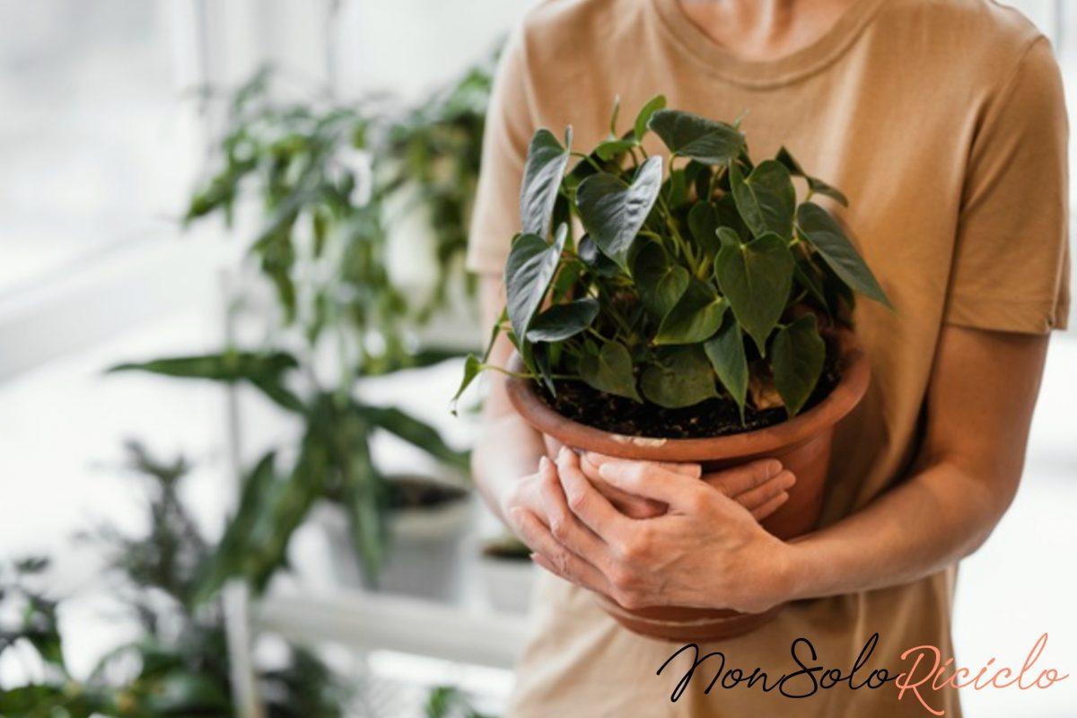 fertilizzante per piante questo si 6