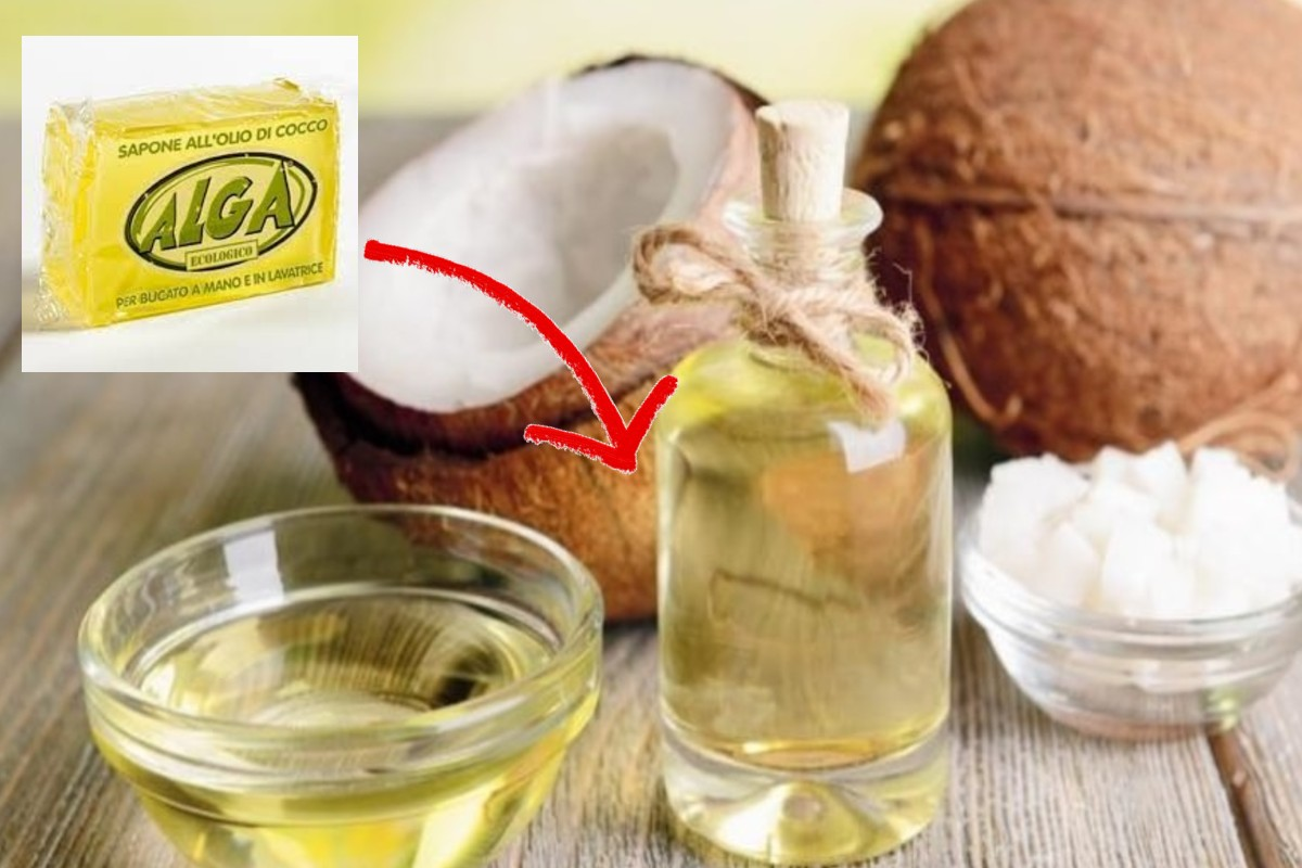 sapone con olio di cocco sapone allolio di cocco