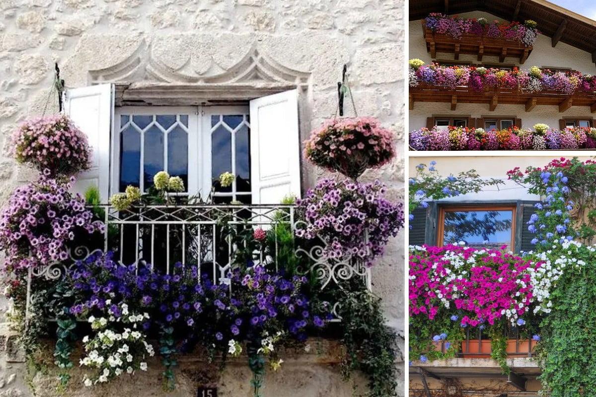 abbellire il balcone di casa balconi fioriti