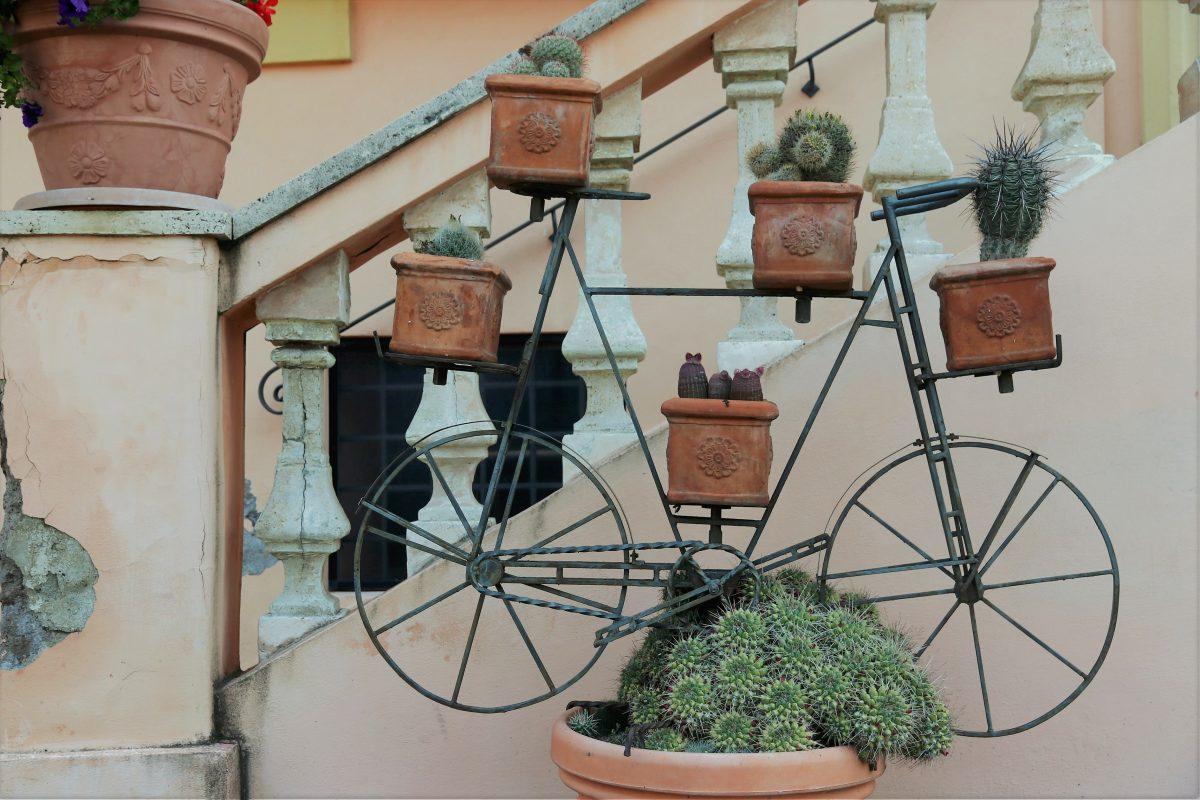 Arredare con piante grasse: l'arte arricchire la casa con piante grasse!