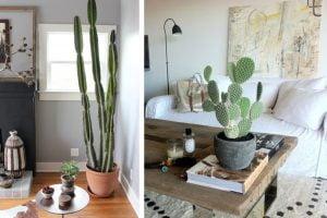 arredo la semplice arte di arredare con le piante grasse