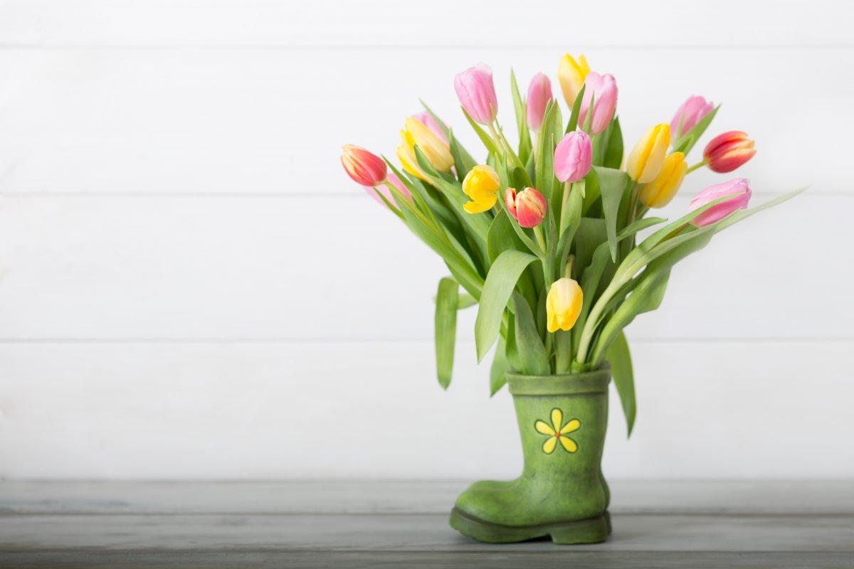 fiori primaverili scopri quali piantare AdobeStock 101538972