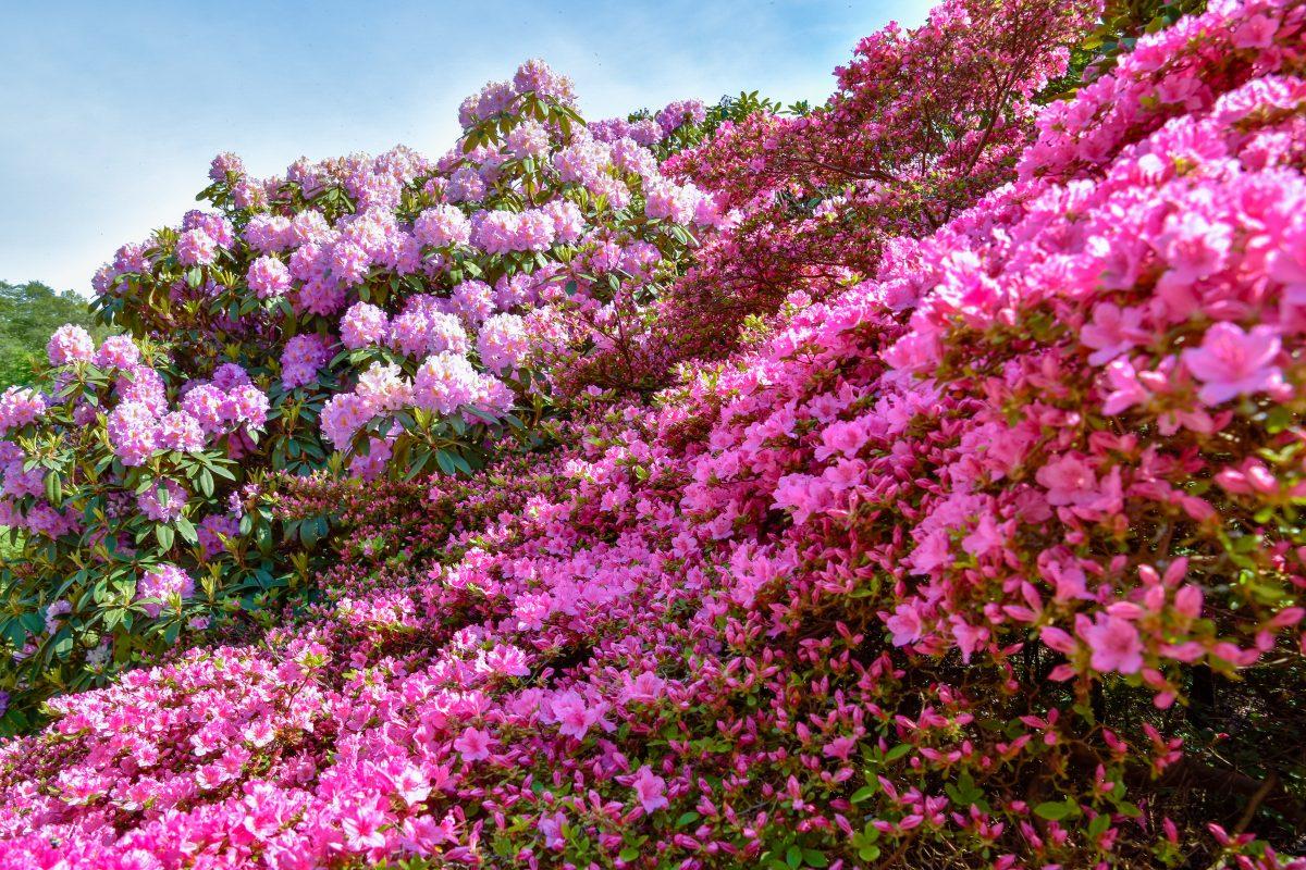 fiori primaverili scopri quali piantare AdobeStock 271818833