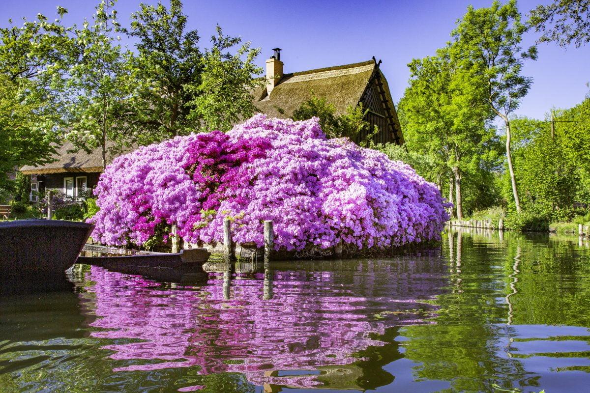 fiori primaverili scopri quali piantare AdobeStock 295469219