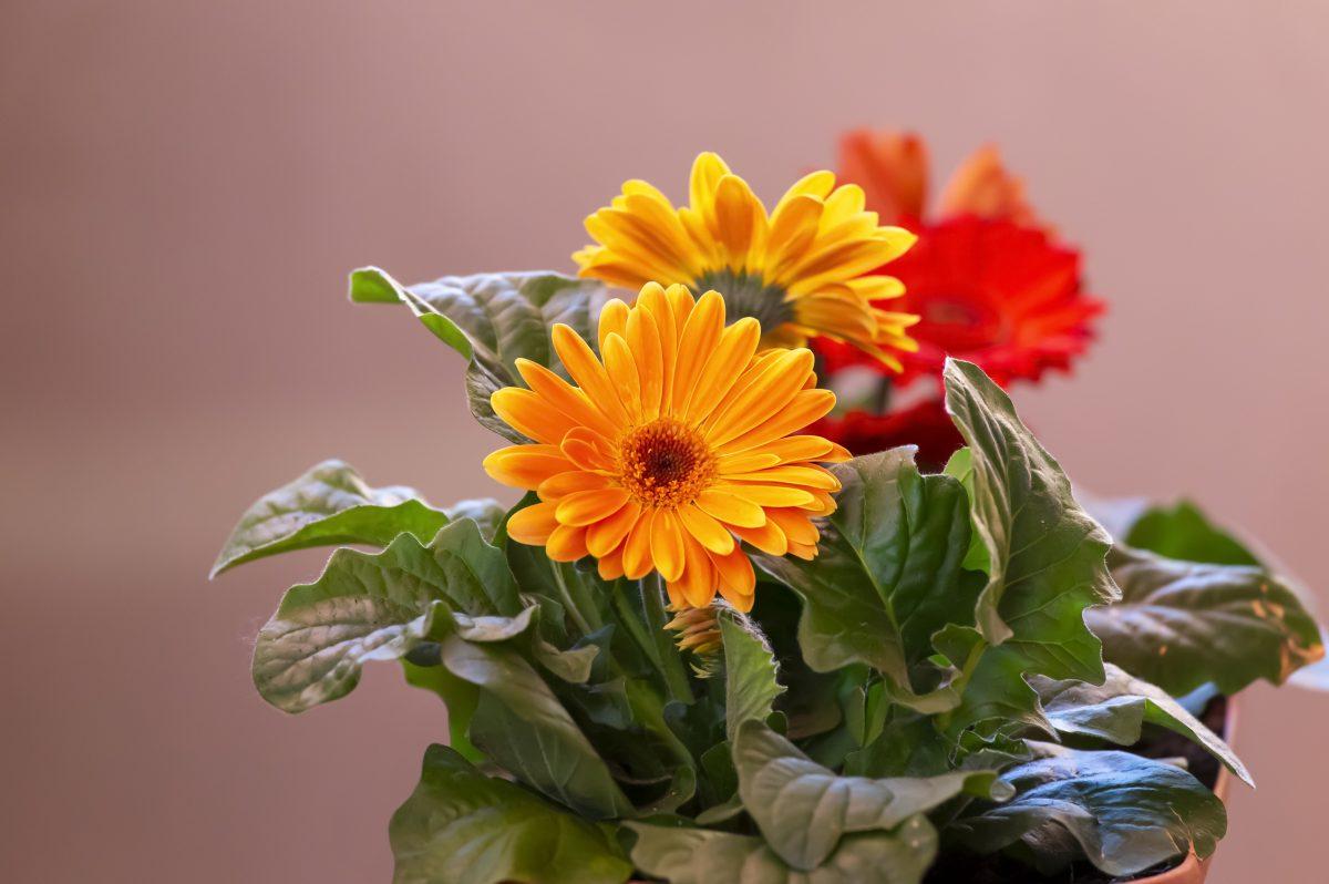fiori primaverili scopri quali piantare AdobeStock 347563485