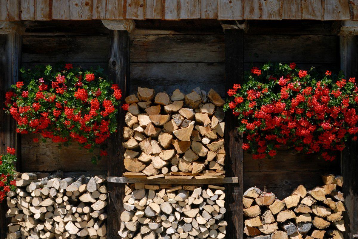 fiori primaverili scopri quali piantare AdobeStock 4344133
