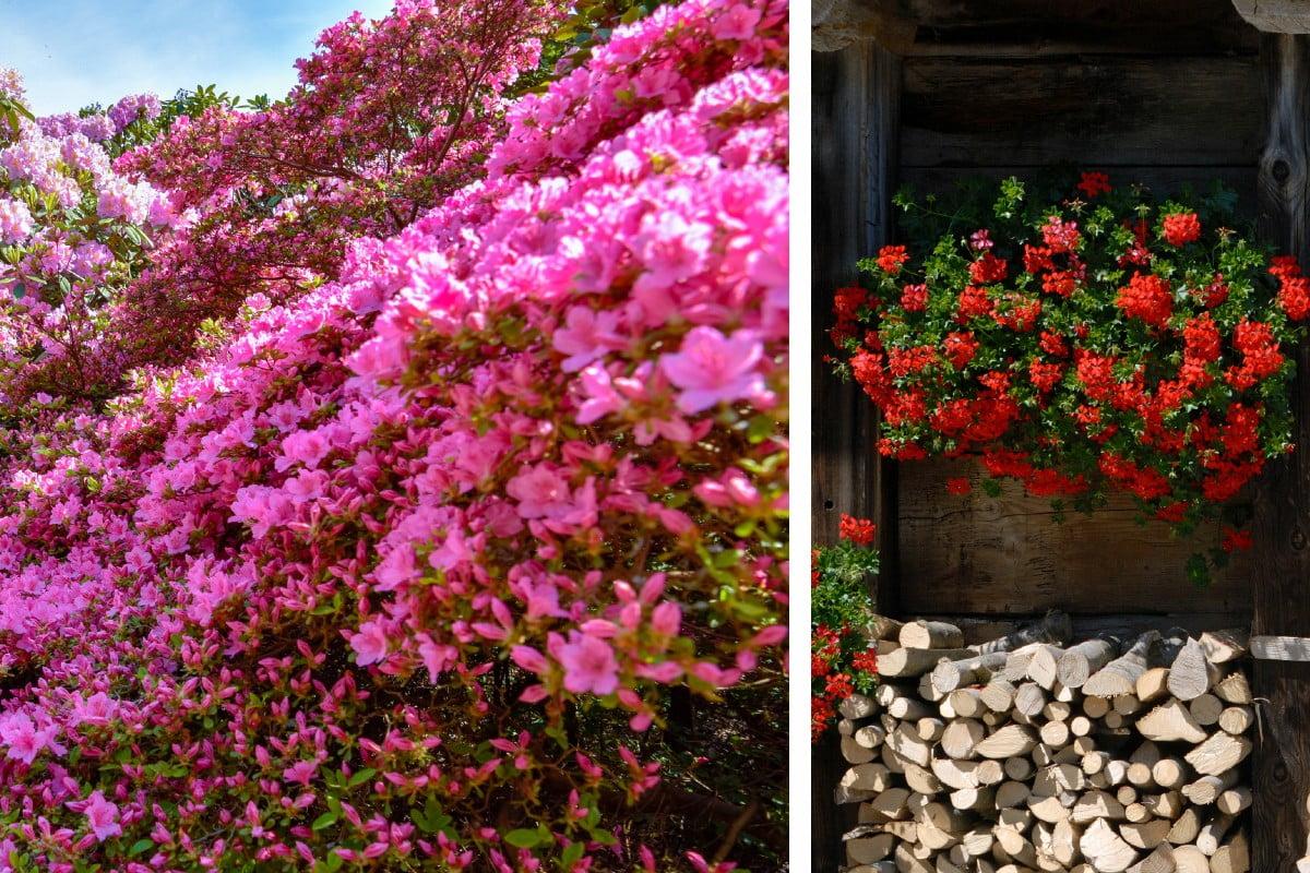 fiori primaverili scopri quali piantare fiori in primavera