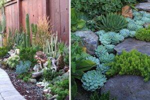 le piante grasse da esterno giardino piante grasse
