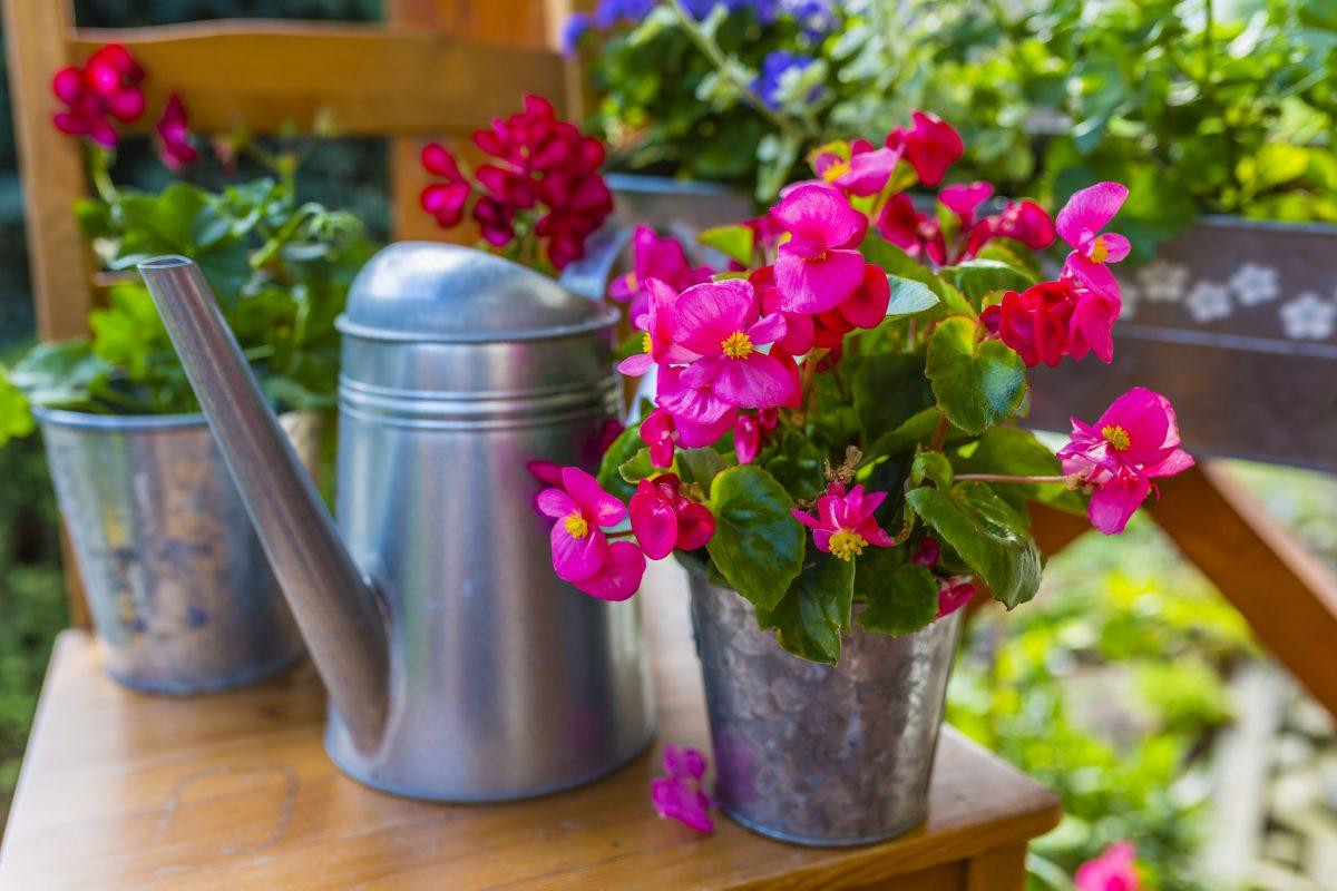 le piante per il bagno AdobeStock 209193542