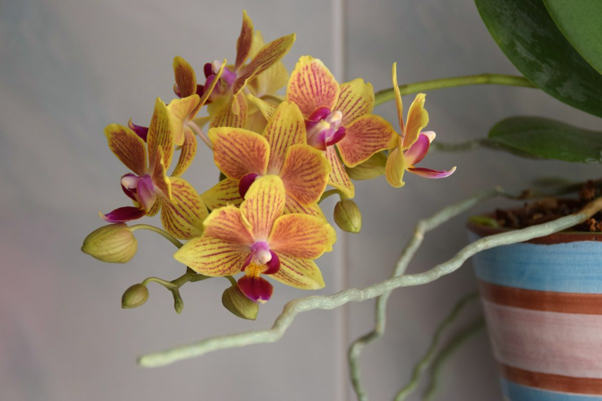 le piante per il bagno AdobeStock 212414241